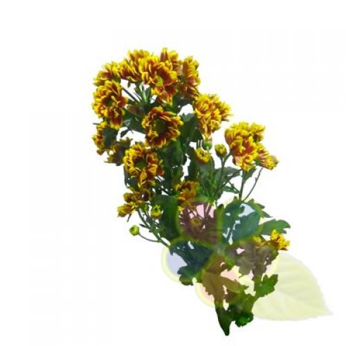 Камелия цена цветок 93